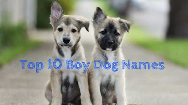 The Top 20 Dog Names That Are Going To Be Hot In 2015
