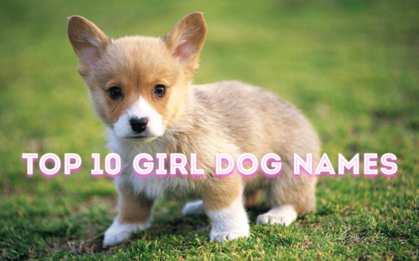 The Top 20 Dog Names T...